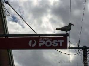 Creepy seagull at the post office