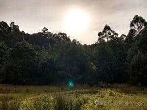 Bush near Port Arthur, complete with ghost orb. I had a look, there was nothing down there to cause the reflection.