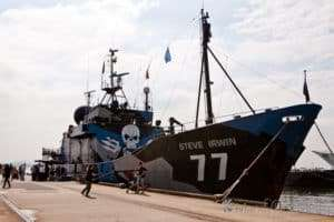 The Steve Irwin. The Sea Shepherd's most famous vessel.
